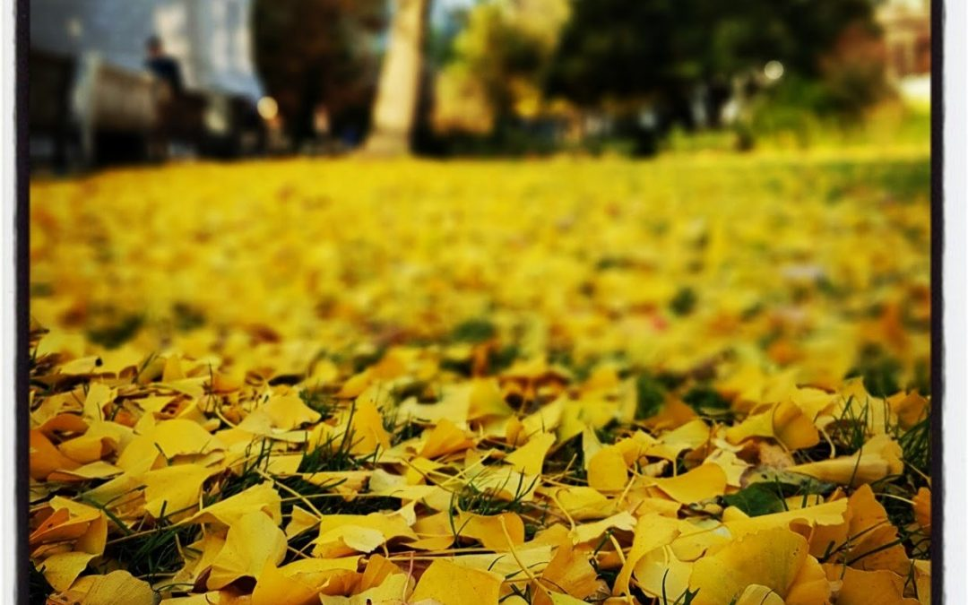 I Truly Love Autumn